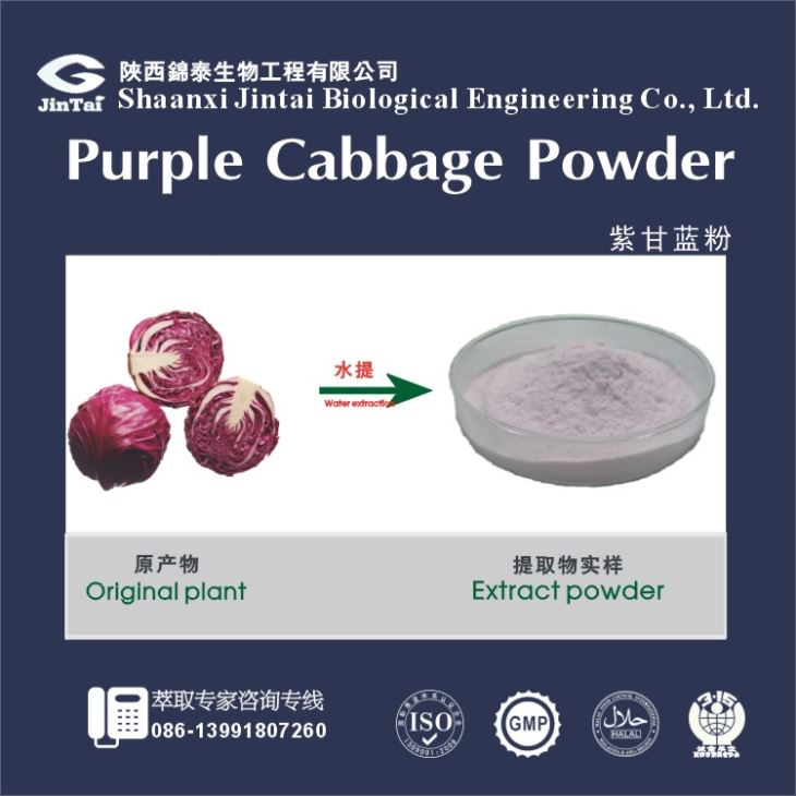Anti-aging Natural Organic Cabbage Extract Powder/100% watersoluble organic red cabbage powder