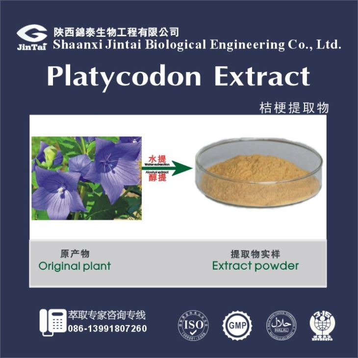 Pure Natural Radix Platycodonis Extract Radix Platycodonis P.E balloon flower Root Extract
