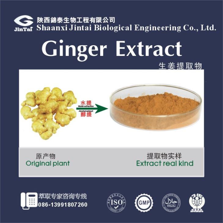 Organic 5% ginger extract gingerol/Ginger Extract Powder/Ginger Extract