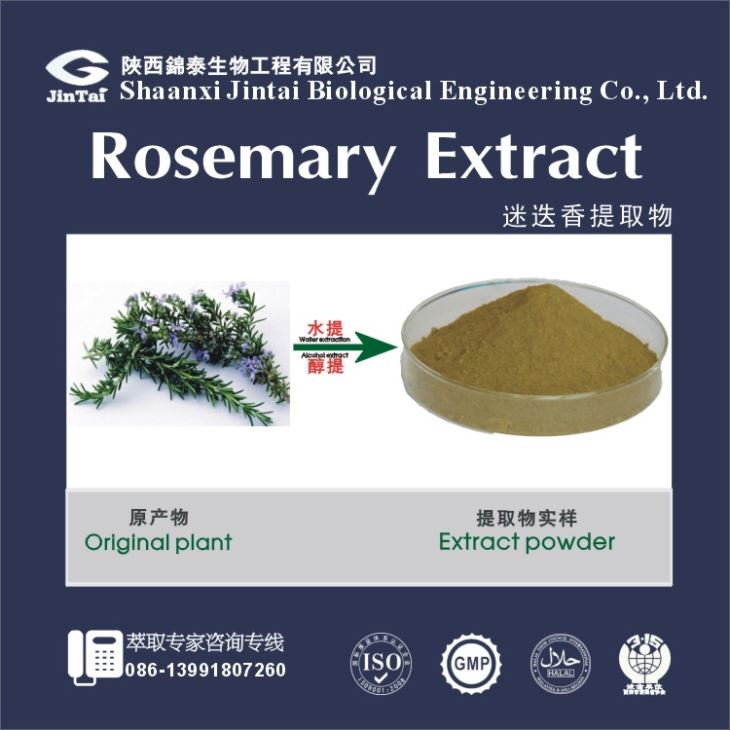 Rosemary Extract Ursolic Acid.Organic Rosemary Extract.Ursolic Acid Powder