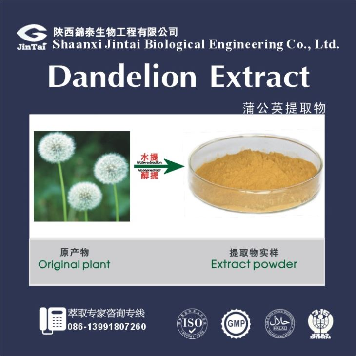 TaraChina manufacturer taraxacum officinale extract powder dandelion root for sale