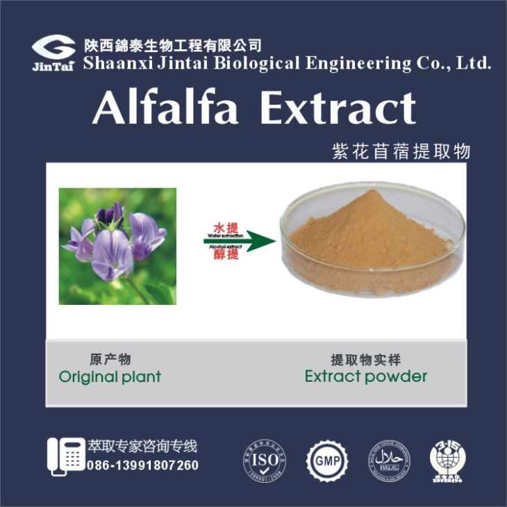 Gold Manufacture supply pure natural alfalfa extract, alfalfa leaf extract, 5% flavonoids