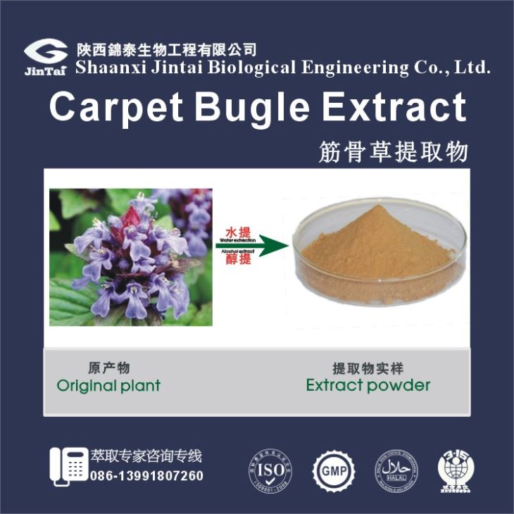 Top Quality Decumbent Bugle Herb Extract, Decumbent Bugle Herb Powder Extract, Decumbent Bugle Herb PE 4:1 5:1 10:1 20:1
