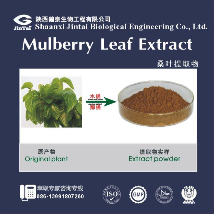 Natural Mulberry Leaf Extract 1-Deoxynojirimycin diabetes products