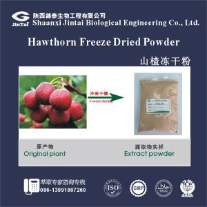 1005 natural fruit without additive Freeze Dried Hawthorn Powder