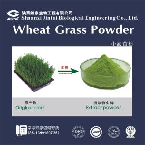 Natural Food Additive Wheat Grass Powder/ Wheat Sprout Powder/liver protection wheat grass powder