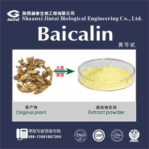 High Quality Baical Skullcap Root Extract Baicalin /90% Hplc Baicalin/Natural Scutellaria Baicalensis P.E.