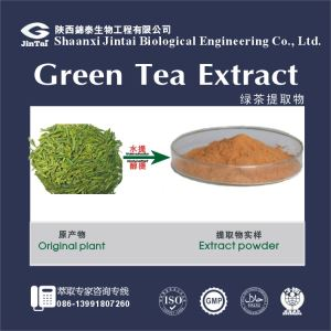top quality 95% EGCG green tea extract / instant green tea powder with free sample