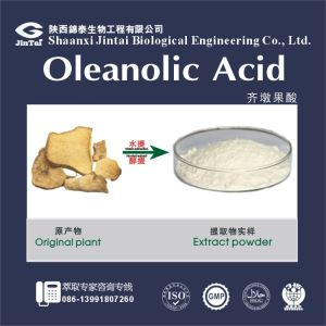 Oleanolic Acid / Glossy Privet Fruit Extract/Natural Glossy Privet Fruit Extract