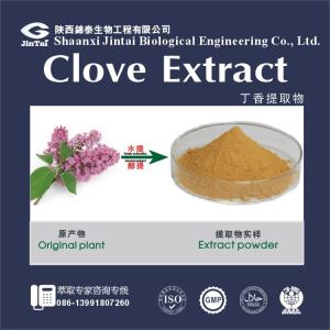 100% Natural Red Clove Extract Powder/Clove Oil Extraction/ Eugenol / Wholesale Essential Oils