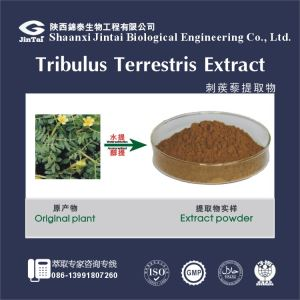 Natural Tribulus Terrestris Extract /Tribulus Saponins/Tribulus terrestris saponins standardized extract