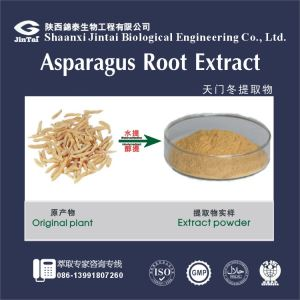 High quality Cochinchnese Asparagus Root/factory Supply Chinese Herb Cochinchnese Asparagus Root P.E.