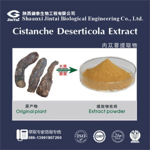 Natural Cistanche Extract/Factory supply Cistanche Extract/cistanche deserticola extract
