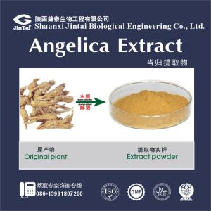 Organic root powder angelica/terrific quality powdered angelica root extract specially good for your family health
