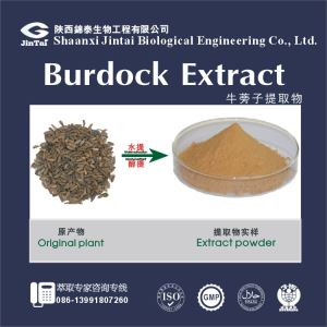 40% Arctiin Extract,Arctiin Powder Extract,Arctiin Great Burdock Achene Extract