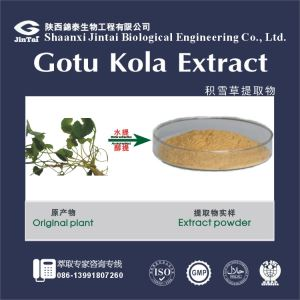 High Quality Natural Gotu Kola Extract/Best Price Natural Gotu Kola Extract /100% natural Gotu Kola extract