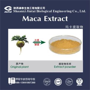 Pure natural Maca extract / Maca extract powder/ Maca root extract