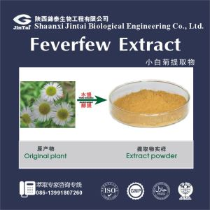 Hot sale factory supply high quality pure Feverfew flower extract , feverfew flower P.E.
