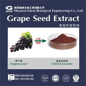 High quality grape seed proanthocyanidin extract, proanthocyanidin powder