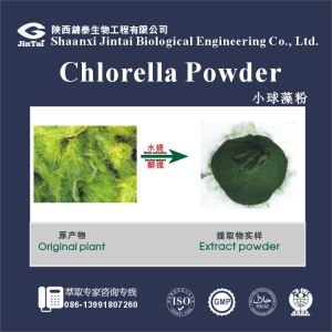 Organic Wholesale Chlorella Powder , Chlorella Extract , Chlorella Protein
