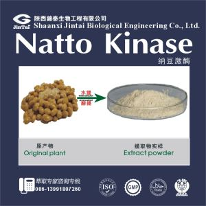 High Quality Natto Powder/Natto Kinase/Bacillus Subtilis Natto