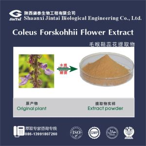 Pure Natural 98% Coleus Forskohlii Extract Forskolin / Coleus Forskohlii Extract