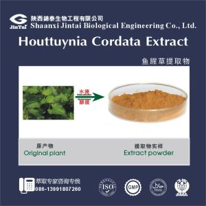 Factory supply Houttuynia Extract/Houttuynia Extract powder/Houttuynia cordata extract