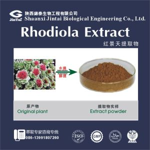Best selling product rhodiola rosea root powder extract/2% Salidroside 10338-51-9