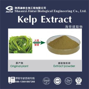 Factory Supply Kelp Seaweed Extract /Kelp Extract/Seaweed Extract 95%