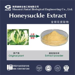 Natural herb powder 98% Chlorogenic Acid HoneySuckle Flowers Extract