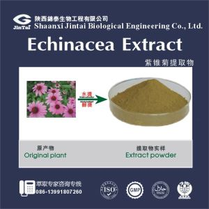 Echinacea Purpurea Extract with Chicoric acid