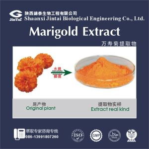 Natural pigments,Marigold Extract, Marigold oleoresin, Lutein