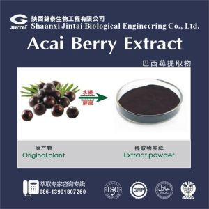 natural acai berry powder/acai berry fresh fruit/acai berry extract