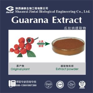 Chenlv Extract/ natural caffeine phytochemicals, guarana extract powder 20% CAS 5743-12-4