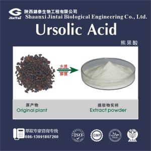 Manufacturer supply High quality Ursolic Acid powder/Low Price Natural Ursolic Acid Extract Powder