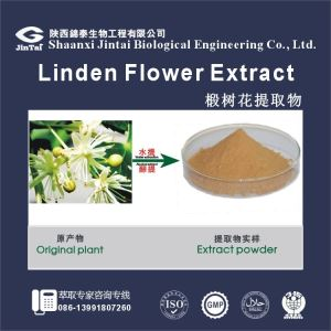 Natural Tilia Europaeg Extract with low price and good quality