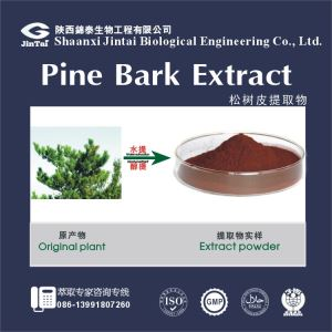 Natural French Pine Bark Extract//Pinus massoniana/Pine Bark Extract 95% OPC(Proanthocyanidins)