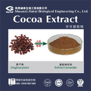 High Quality natural Cocoa Bean Extract/Organic Cocoa Seed Extract For Wholesales
