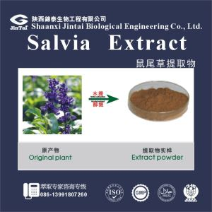 salvia extract powder danshen powder salvia miltiorrhiza root extract