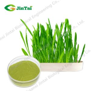 Barley Grass Powder/Health product organic wheat/barley grass powder