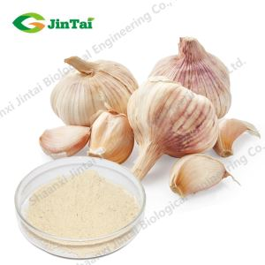 Factory Supply Top Quality Organic Freeze Dried Garlic Powder