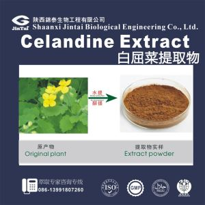 Hot Sale Celandine Extract Powder 10:1